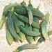 2x1 Semillas Orgánicas para Huertas de Verano
