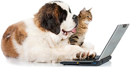 Contáctanos a kachorro.cl y conoce más de nuestros productos: alimentos y accesorios para mejorar la calidad de vida de tu mascota