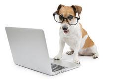 Contáctanos a kachorro.cl por correo electrónico o teléfono